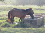 Sea Horse Ranch 8