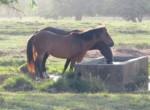 Sea Horse Ranch luxury villa for sale15